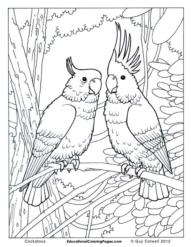 tags animal coloring pages free printable animal coloring pages to