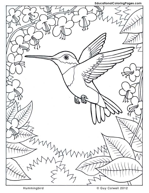 tags flower hummingbird pages