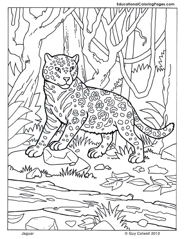 jaguar for kids