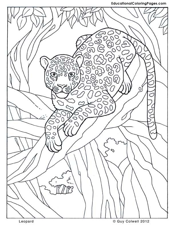 Preschool Zoo Series FREE Printables and Crafts: Big Cats   coloring pages for animals in the jungle