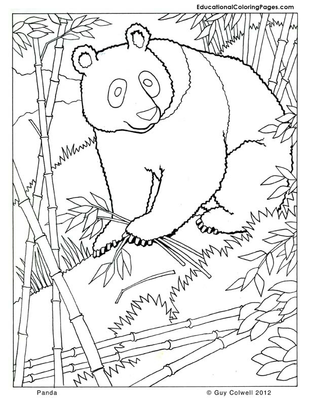pictures to color of animals animal coloring pages for kids