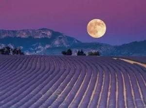 calendario delle semine-calendario lunare