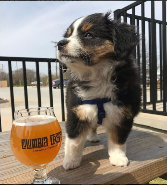 Columbia Craft puppy.JPG
