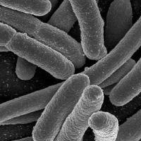 Superbacteria inmune