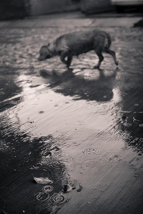 street-dog-under-the-rain-olga-medrano