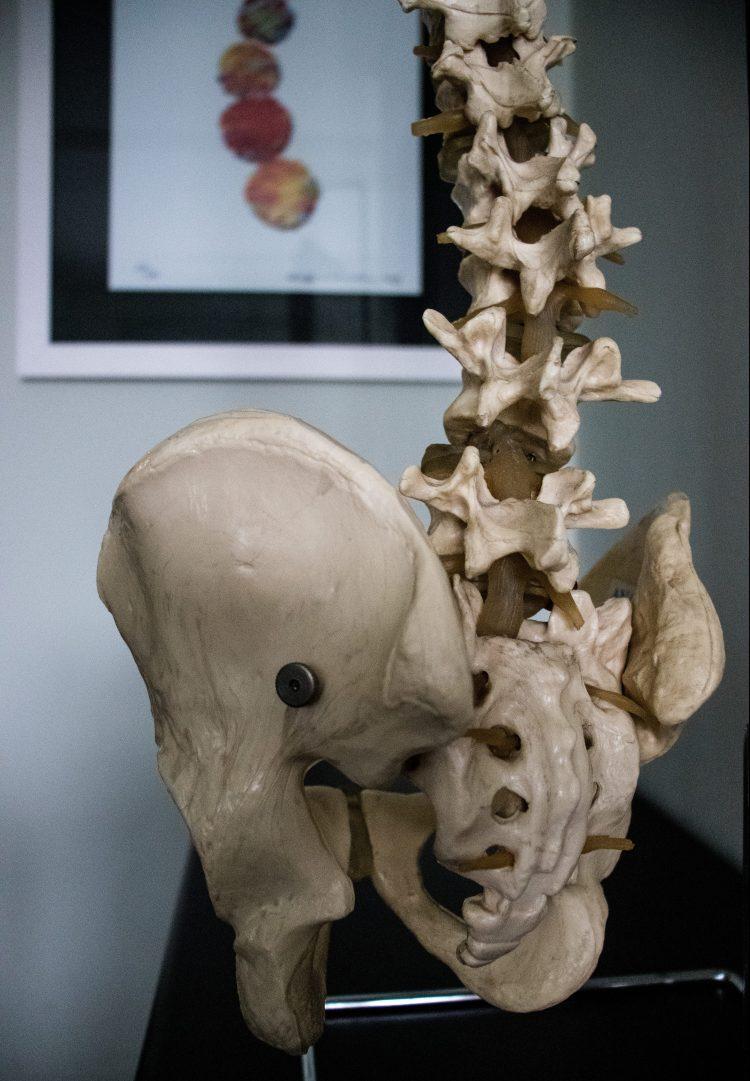 Foto de um modelo da coluna lombar