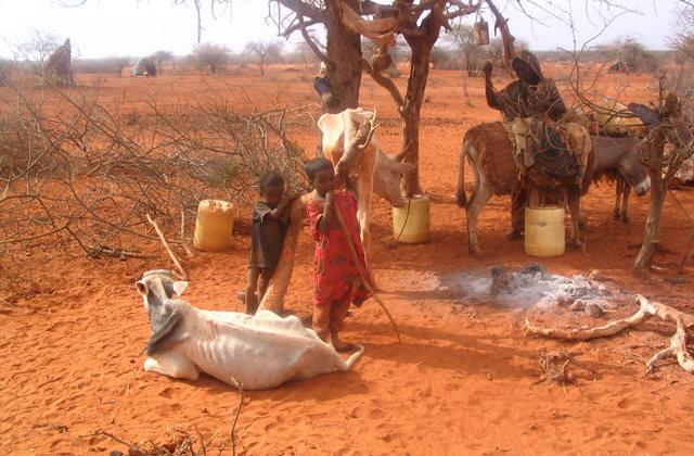 Carestia nel Corno d'Africa. Diciassette milioni di persone alla fame