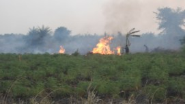 Education is key to the success of sustainable land management practices. Intensive environmental education about the impacts of destructive bushfires will combat land degradation.