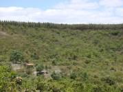eucaliptus in the ridge of the hills