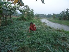 Riverbank conservation is also part of the focus of COMDEKS activities aimed at enhancing ecological landscape resilience through community based activities in Nepal.