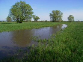 Wet meadow Blata with water in depression