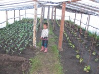 Community gardens and greenhouses contribute to the communities food supply. Successful experiences from Mongolia in piloting the community-based landscape management approach will be used as models for replication and upscaling in other parts of the world. Knowledge products, such as case studies and video documentaries will help disseminate learning.