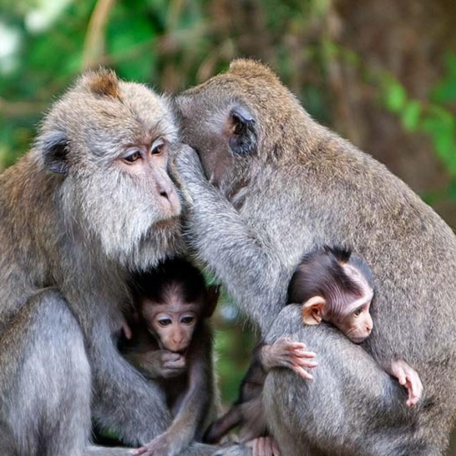 Borneo Indonesia kalimantan Orangutan tour