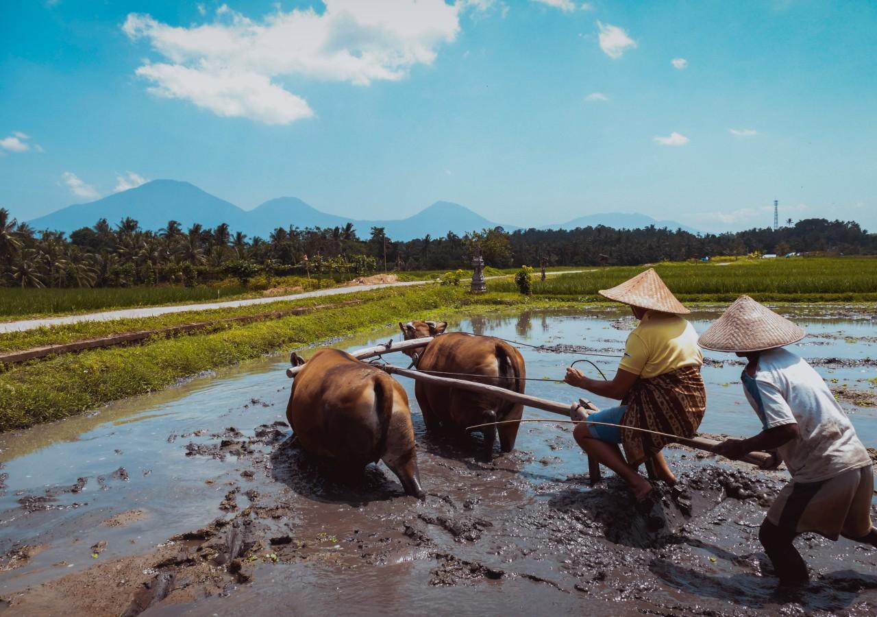 bali village tour come2indonesia indonesia