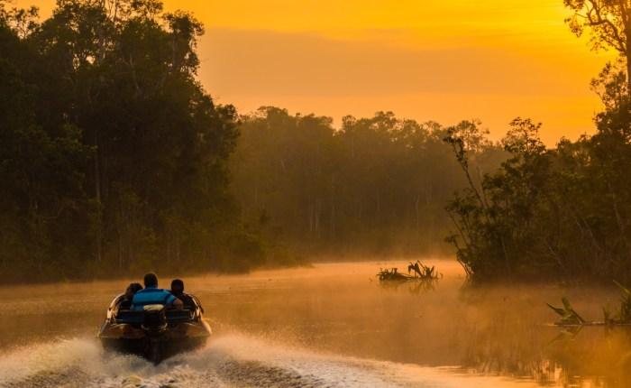 Orangutan tour speedboat borneo