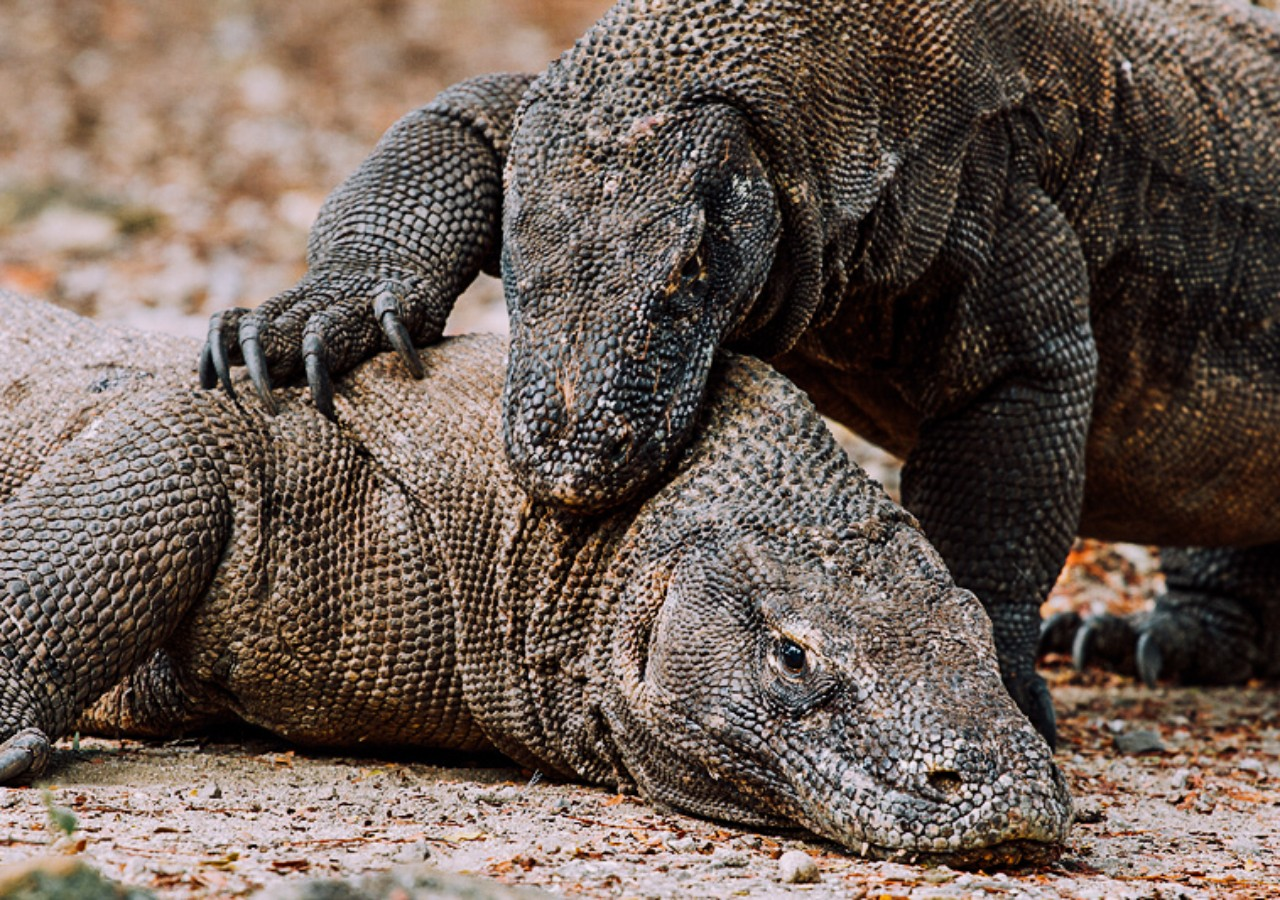 komodo tours in Indonesia