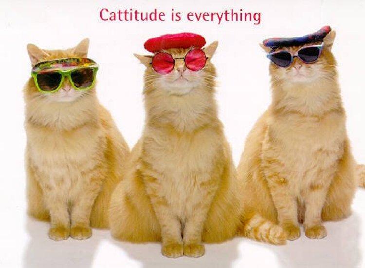 cattitude.jpg