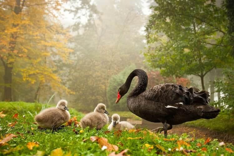 25-Most-Beautiful-Animals-Photography-StumbleUpon-11.jpg