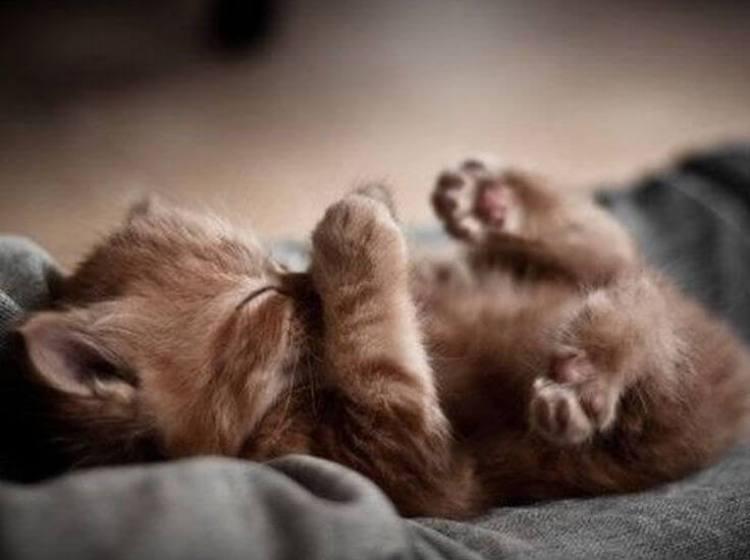 88175768d370d8dff387e0303297e732--cute-kitty-cat-stuff.jpg