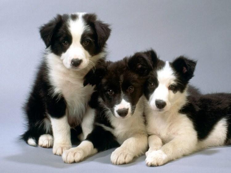 Dogs-dogs-16697072-500-375.jpg