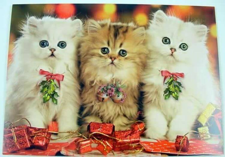 223143-Christmas-Kitties.jpg