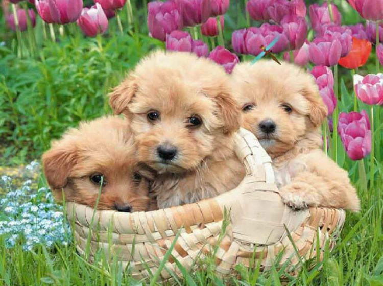 kittens-and-puppies-wallpaper31.jpg