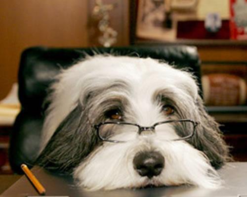 Shaggy dog at his desk.