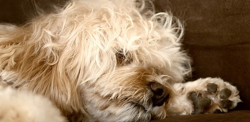 Help your dog learn to be controlled and calm to reduce his anxiety