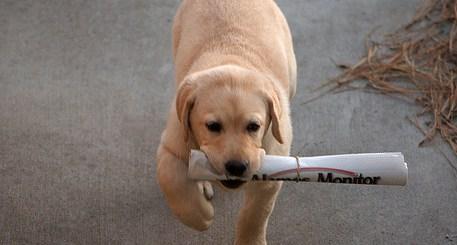 Teach Your dog tricks