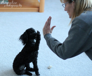 Dog Tricks-High Five