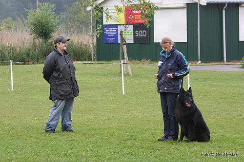 obedience dog photo