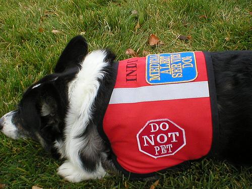 service dog vest photo