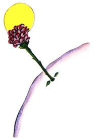 La rosa del Principito