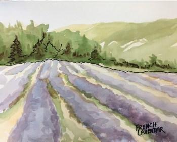 Lavender fields, watercolor