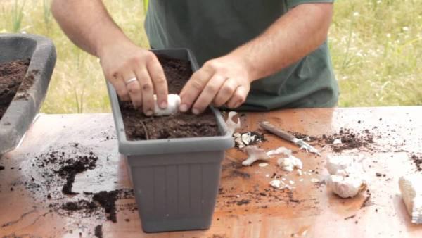 Cultiva un #huerto y vive mas años