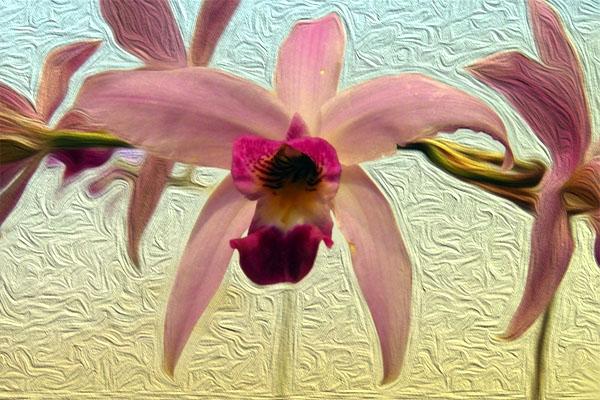 Orquídeas y Paisajes culturales. Exposición de Primavera. Museo Franz Mayer * Claustro. Del 7 al 15 de mayo. 2016