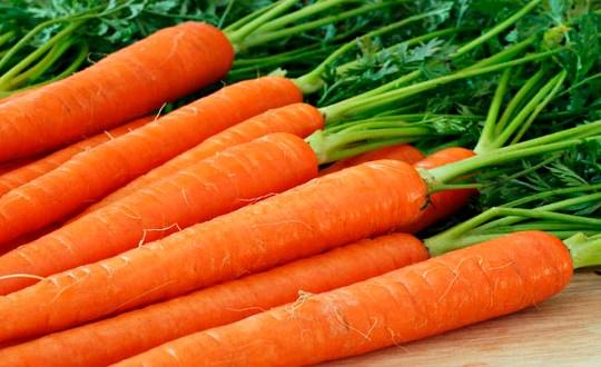 Video: Como sembrar zanahorias en el huerto urbano