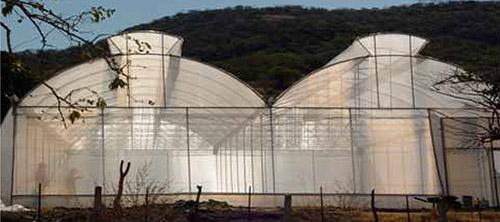 Invernadero tipo túnel con doble ventila cenital. Tenemos insumos para invernadero, te damos asesoría.