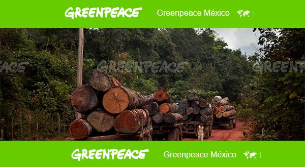 Bosques y selvas. Casi un 80%  de los bosques del mundo han sido degradados o destruidos.