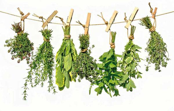 """Descubre una gran cantidad de plantas medicinales y sus usos. Las plantas medicinales continúan siendo la panacea """"de cabecera"""" de muchas familias"""