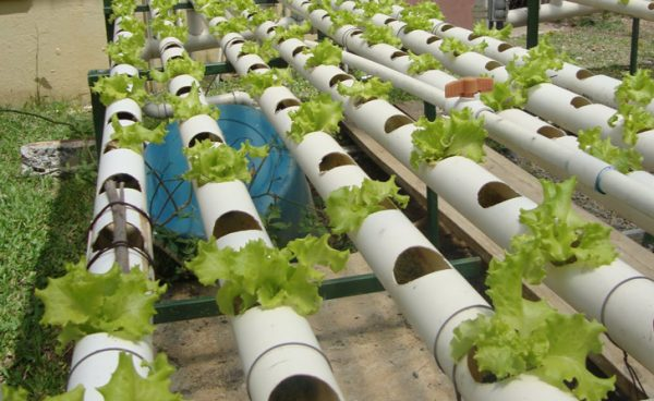 Pasos sencillos para iniciar tu propio cultivo hidropónico