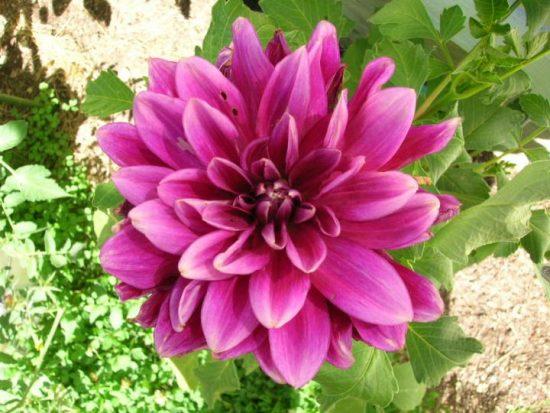 12 plantas de sol para el verano, las opciones para dar color a tu terraza o jardín en verano son muchas
