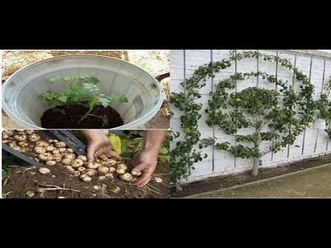 Grandes secretos y trucos de jardinería que te apuesto no conoces 🥀 🌺 🌻