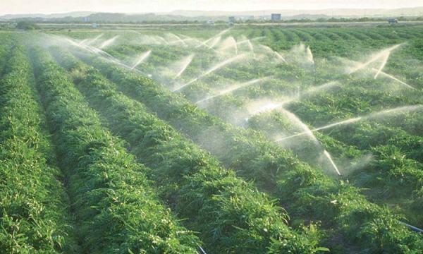 #Riego por aspersión: el agua llega a las plantas en forma de lluvia