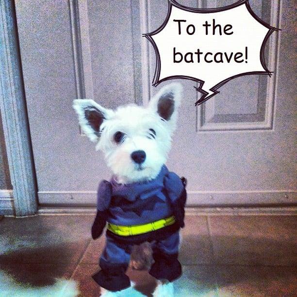 Blog Paws Blog Hop: Wordless Wednesday – Happy Halloween!