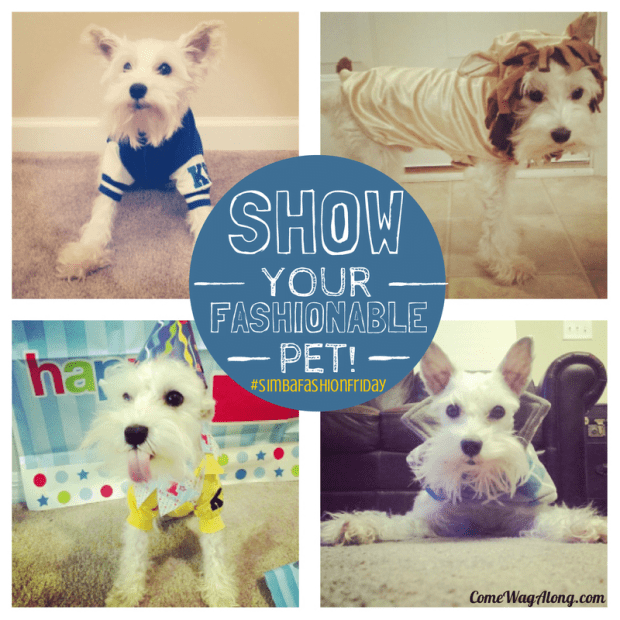 Show Your Fashionable Pet! #SimbaFashionFriday