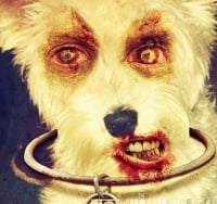 Dead Yourself – Simba the Scary Schnauzer