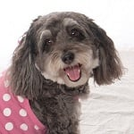 Fashion Friday: My Favorite Pup Jasmine's Pretty in Pink Style