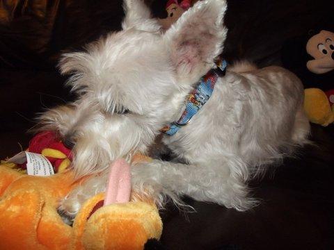 PetSmart Pluto Disney Dog Toy