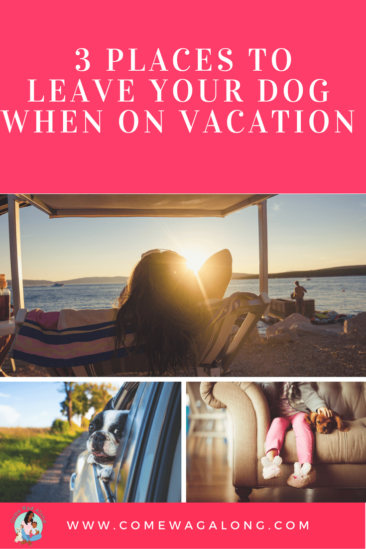 Places to Leave Your Dog When On Vacation - ComeWagAlong.com